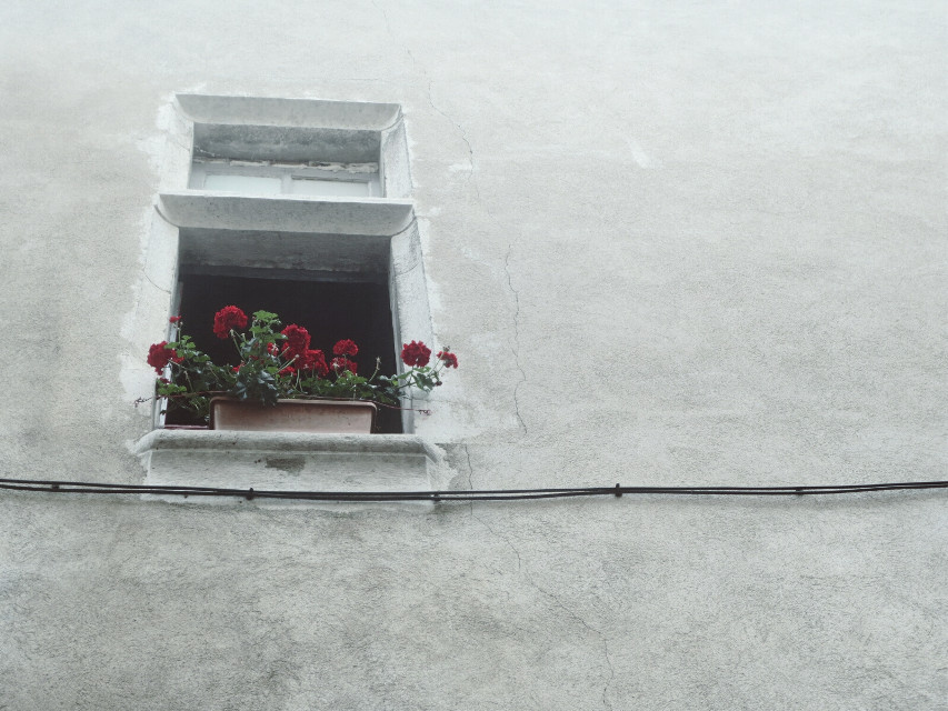 French window...  #flowers  #beautiful  #photography  #lookup  #french   #nature