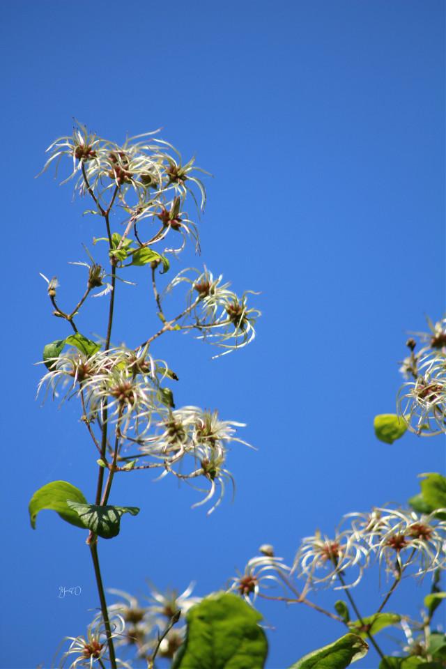 Hello dear friends  #flower #nature #plant #blue_sky #clearsky sky #nofilter #noedit #Berlin #my_berlin #myberlin #colorful #blue #blue #blue sky #photography #autumn