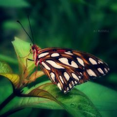 butterfly nature summer travel