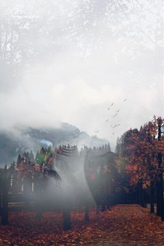 wapautumnvibes trees house fog