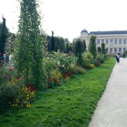 freetoedit paris garden flower grass