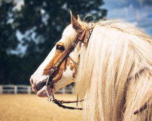 horse portrait petsandanimals nature