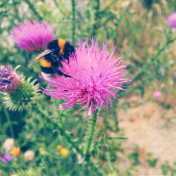 flower bumblebee allah austria nature quran