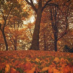 autumn autumnleaves nature netherlands leeuwarden