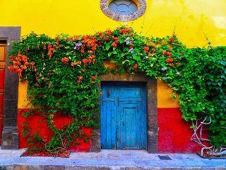 photography colorsplash colorful nature plants