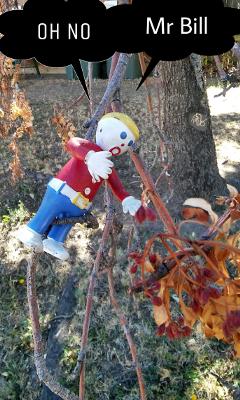 mrbill fall leaves tree treepeople