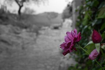 flower colorsplash beauty quotesandsayings