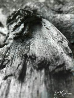 dark photography myclick blackandwhite wood