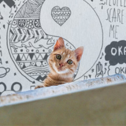 freetoedit reedited cattycat