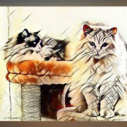 wapmagiceffects magiceffect ortoneffect cats petsandanimals