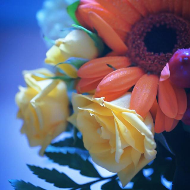 #bokeh  #colorful  #flower  #freetoedit  #cute  #nature  #love  #photography  #photo  #FreeToEdit