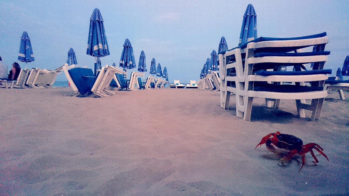 Crab 🦀🦂 😊 #holiday #bulgaria  #2016 #sunnybeach #blacksea   #beach   #sunbed #crab  #FreeToEdit  #edited #piscartedit  #sonyxperiaphotography #sony #smartphonephotography