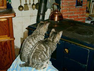 kitten cute animals fireplace autumn