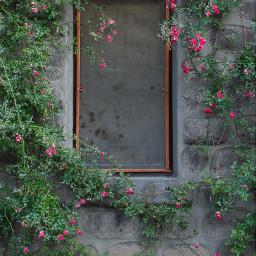 freetoedit background window flowers city