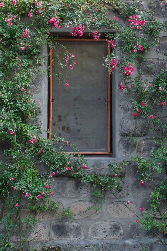 #FreeToEdit #background #window #flowers #city #nice #grig15