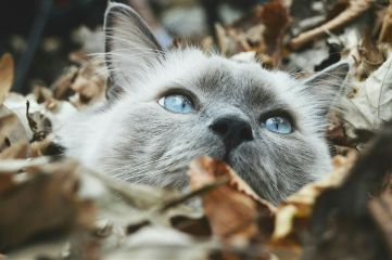 freetoedit cat leaves fall photography dpchappyplace