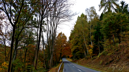 countryside countryroad autumn autumnleaves landscape