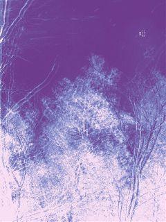 nature trees sky purple leonardcohen