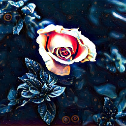 freetoedit midnight flower