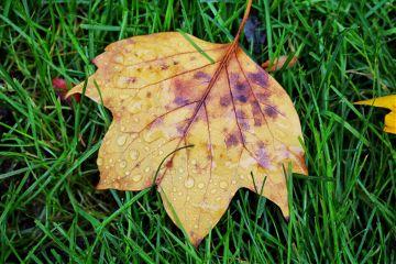 dpcleaves leaves fall freetoedit autumn