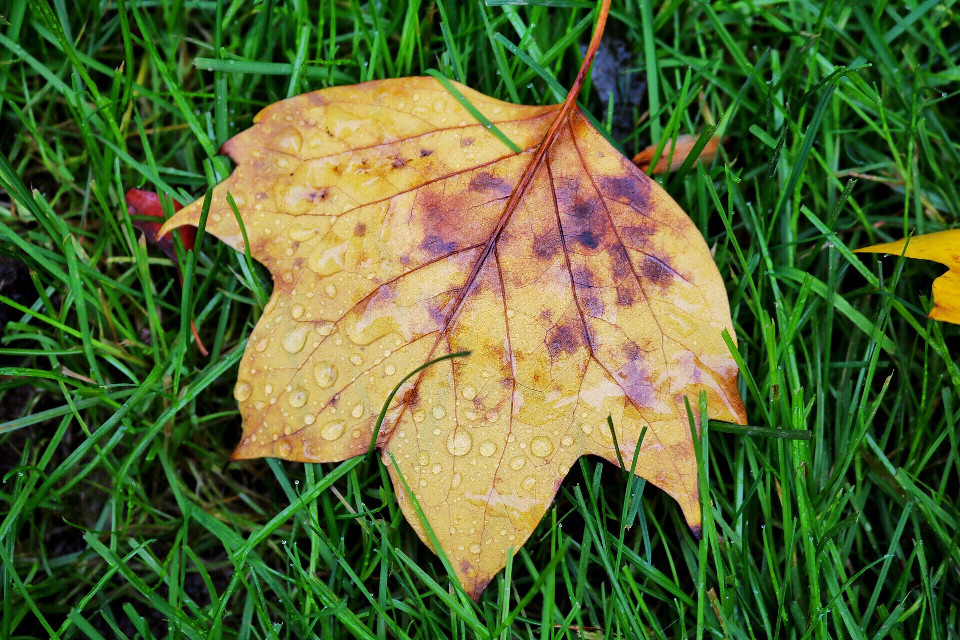 #dpcleaves #leaves #fall #FreeToEdit #autumn #dewdrops #dpcspots #dpcfallfeels