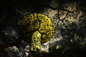photography night pattern nature freetoedit