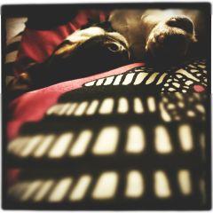 freetoedit dog love timo